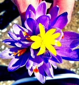 Abruzzo Flower