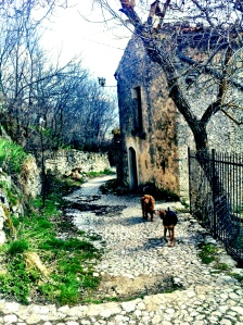 Abruzzo pups